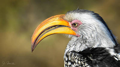 Hornbill Wall Art - Photograph - Flying Banana by Joe Bonita