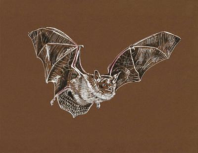 Painting - Flying Bat by Masha Batkova