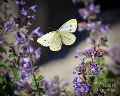 Photograph - Flying Between The Flowers by Kerri Farley