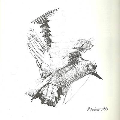 Drawing - Flying Bird Sketch by Denise F Fulmer