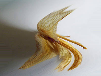 Photograph - Flying Bird by Vilma Zurc