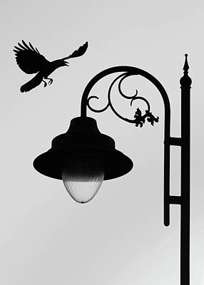 Photograph - Flying Crow Vs Street Lamp by Prakash Ghai