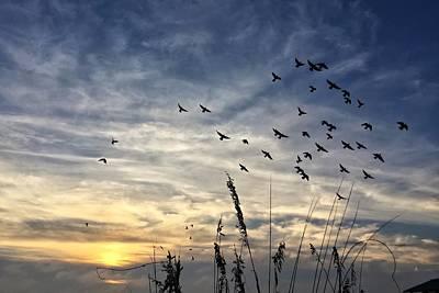 Photograph - Flying Birds  by Juan Montalvo