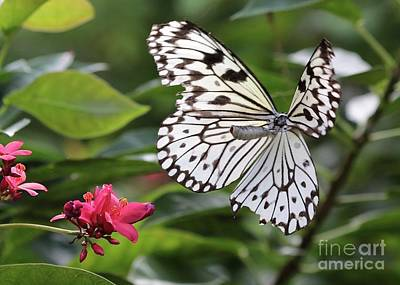 Photograph - Flying Butterfly by Carol Groenen