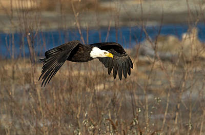 Photograph - Flying By by Shari Sommerfeld