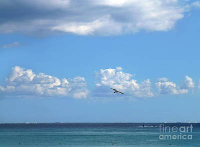 Photograph - Flying By The Sea by Francesca Mackenney