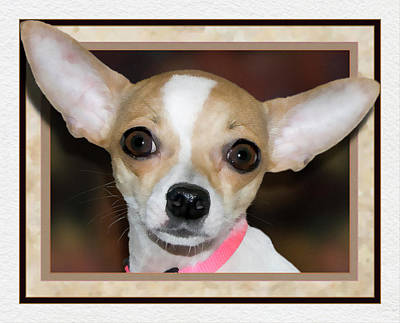 Chihuahua Digital Art - Flying Chihuahua by Harry Hunsberger