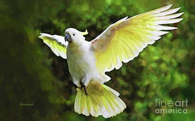 Cockatoo Mixed Media - Flying Cockatoo  by Garland Johnson