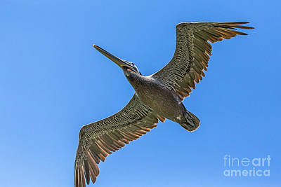 Photograph - Flying Dino by Kate Brown