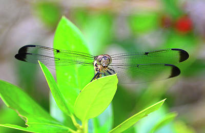 Photograph - Flying Dragon At Rest by David Lee Thompson