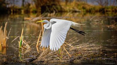 Photograph - Flying Egret And Turtles by LeeAnn McLaneGoetz McLaneGoetzStudioLLCcom