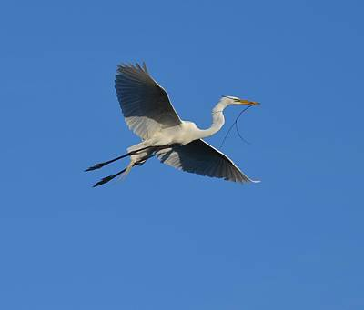 Photograph - Flying Egret  by Richard Bryce and Family