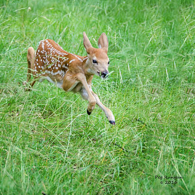 Photograph - Flying Fawn by Peg Runyan