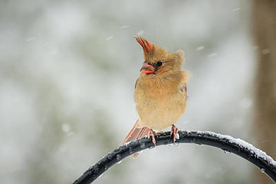 Photograph - Flying Feathers by Joni Eskridge