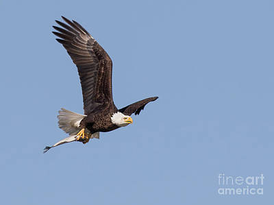 Photograph - Flying Fish by Art Cole