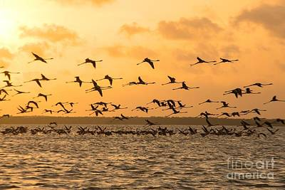 Photograph - Flying Flamingoes At Sunset by Patricia Hofmeester