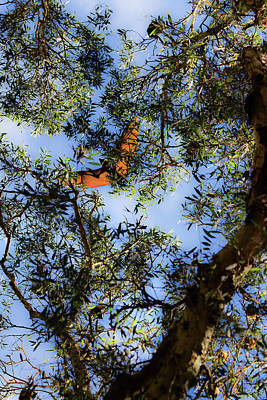 Photograph - Flying Fox Is Flying by Miroslava Jurcik