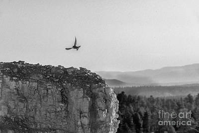 Photograph - Flying Free Along The Canyon Walls by Dan Friend