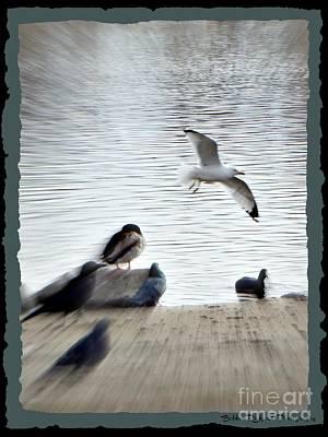 Photograph - Flying Free  by Bobbee Rickard