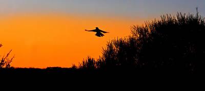 Photograph - Flying Free In Northen Beaches by Miroslava Jurcik