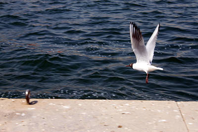 Photograph - Flying Free  by Munir Alawi