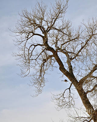 Photograph - Flying Goose By Great Tree by Cindy Schneider