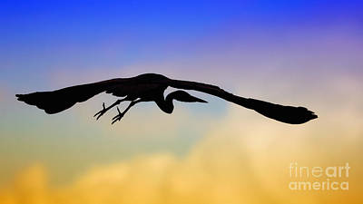 Photograph - Flying Heron In Silhouette by Nick  Biemans