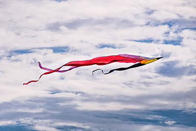 Photograph - Flying High 2 by Robin Zygelman