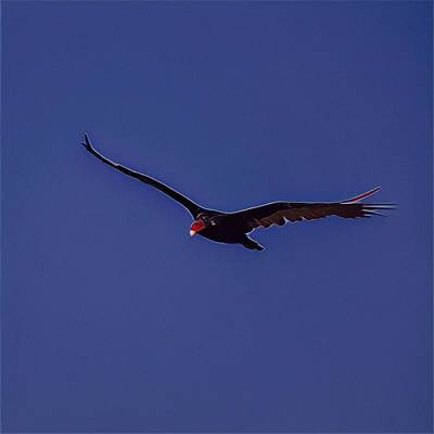 Flying High And Eating Low Art Print by John Pierpont
