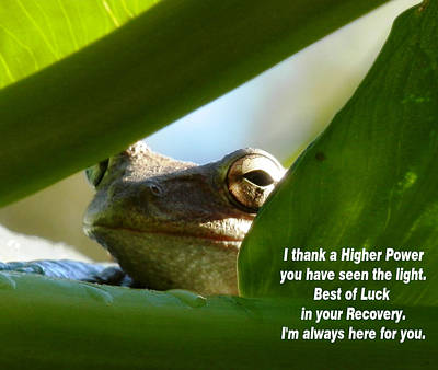 Photograph - Flying High Frog Word by Belinda Lee