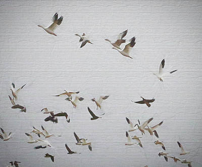 The Flight Of The Snow Geese Photograph - Flying High by Lisa Bell