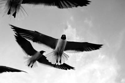 Birds Photograph - Flying High by Marilyn Hunt