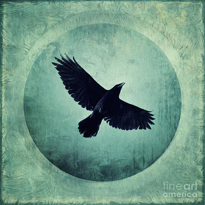 Corvidae Photograph - Flying High by Priska Wettstein