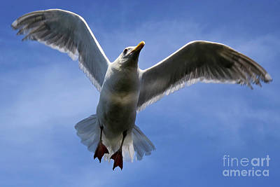 Photograph - Flying High by Sue Harper