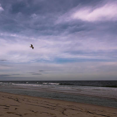 Photograph - Flying Home Seaside Nj Square by Terry DeLuco