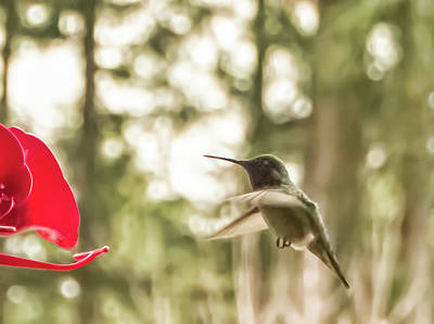 Photograph - Flying Hummingbird by Marilyn Wilson