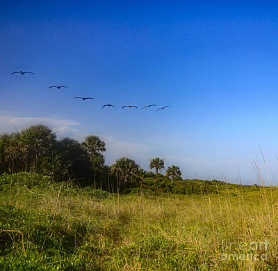 Photograph - Flying In Formation by Elvis Vaughn