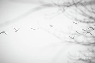 Photograph - Flying In The Fog by Cheryl Baxter