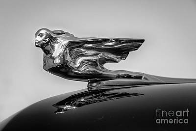 Photograph - Flying Lady Monotone by Dennis Hedberg