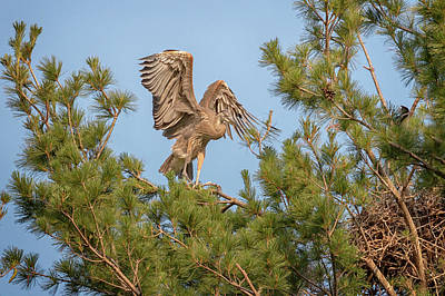 Photograph - Flying Lessons by Susan Rissi Tregoning