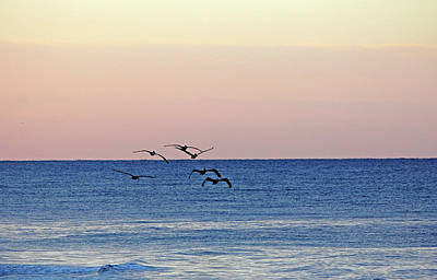 Photograph - Flying Low At Manasota Key by Debbie Oppermann