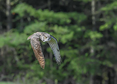 Photograph - Flying Low... by Ian Sempowski