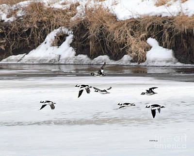 Photograph - Flying Low by Kathy M Krause