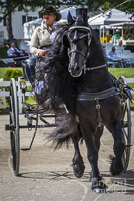 Photograph - Flying Mane Friesian by Joann Long
