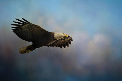 Photograph - Flying On High Alert Bald Eagle Art by Jai Johnson