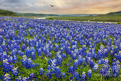 Bluebonnet Photograph - Bluebonnet Fields Forever by Inge Johnsson