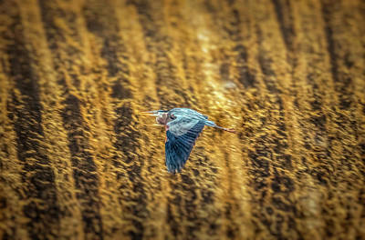 Photograph - Flying Over Falling Water by Lilia D