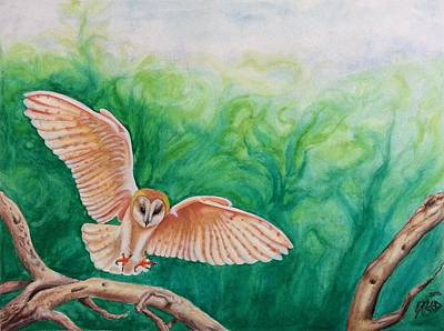 Painting - Flying Owl by Steed Edwards