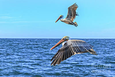 Photograph - Flying Pair by Robert Bales