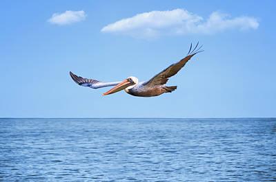 Steven Michael Photograph - Flying Pelican by Steven Michael